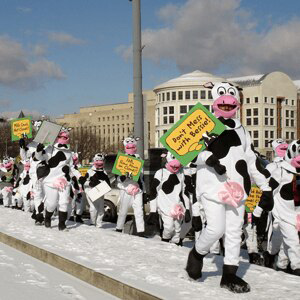 Herd of people dressed as cows in Washington, DC, 2007.